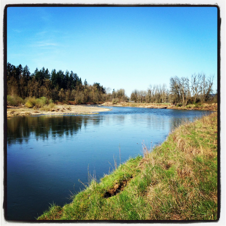 Chehalis River Spring 2013