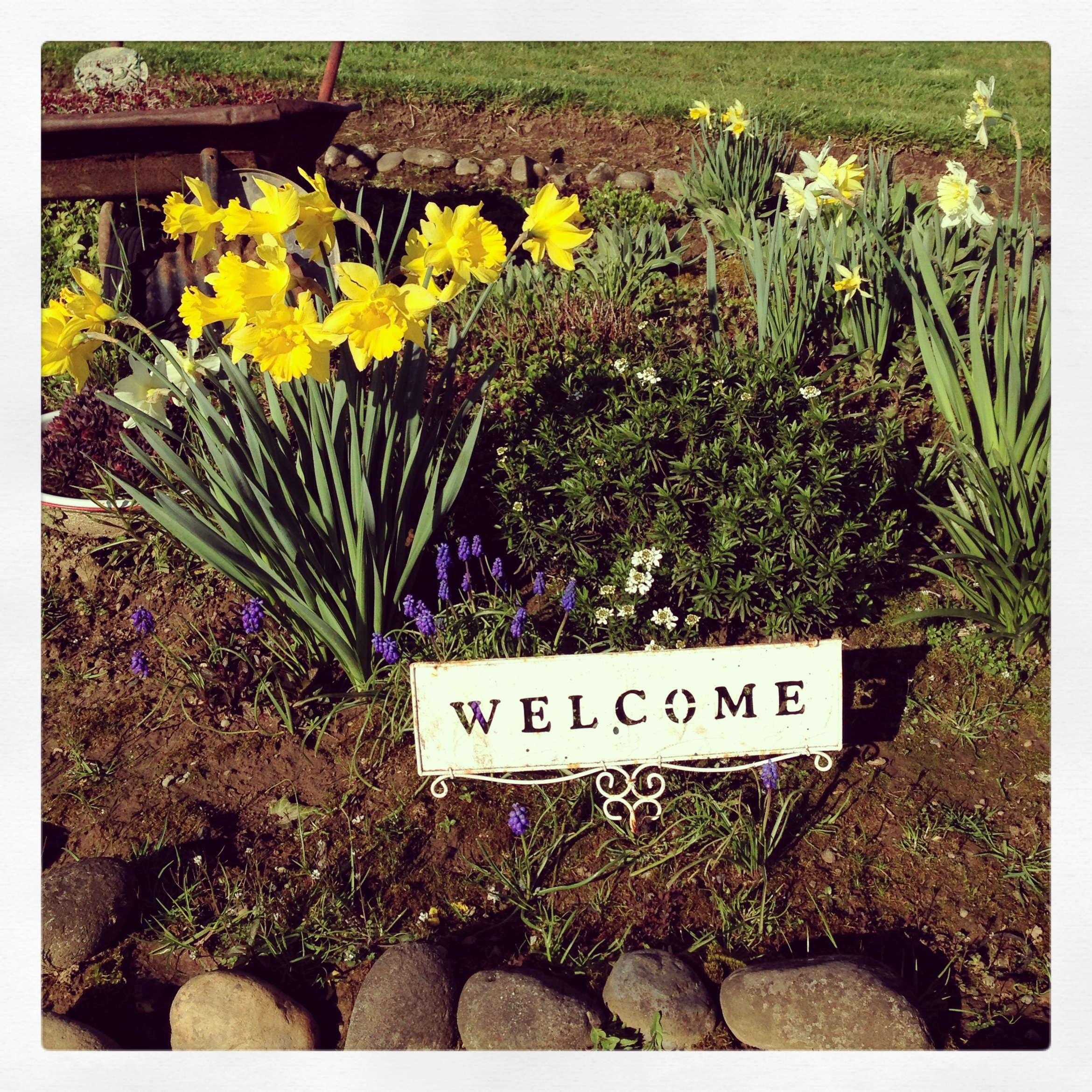 Welcome Spring flowers!