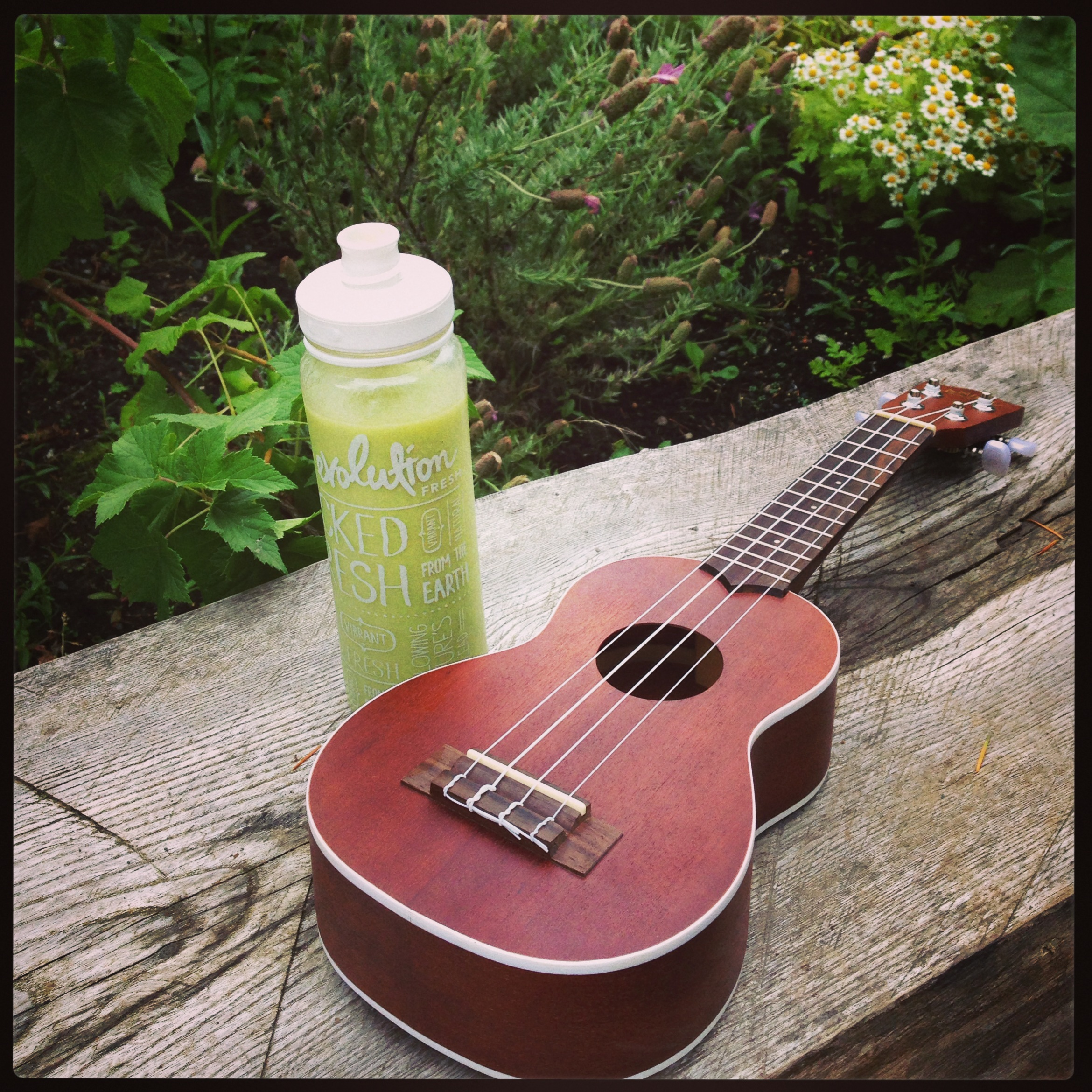 Evolution Fresh Smooth Super Avocado and Ukulele